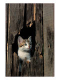 Ketten Peeking Hole In Barn Print