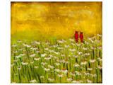 Summer Cardinals Stampe di Anne Hempel