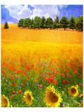 Hilltop Trees with Poppies III Kunstdrucke von Chris Vest