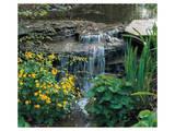 Garden Cascade Posters