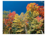 Colorful Autumn Trees Prints