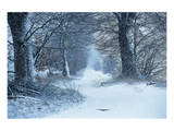 Winter Forest Path Prints