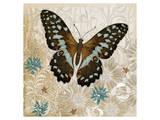 Brown Butterfly Prints by Alan Hopfensperger