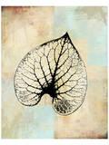 Choc Spice Skel Leaf II Print by Catherine Kohnke