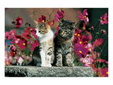 Two Cats On A Pedastal Posters