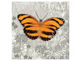 Orange Butterfly Poster by Alan Hopfensperger