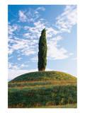 Cypress Friaul Italy Art