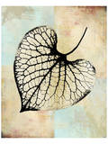 Choc Spice Skel Leaf I Prints by Catherine Kohnke