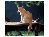Cat On A Bench Prints