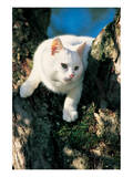 White Cat On A Tree Prints