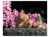 Cat And Pink Flowers Print