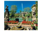 Somptuous Garden IV Prints