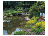 Waterlilies Flower Garden Pond Prints