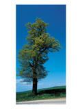 Tree Portrait Posters