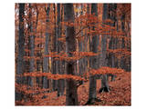 Autumn Forest Trees Prints