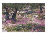 Greek Garden Olive Trees Poster