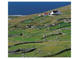 Irish Farm Near The Coast Posters