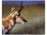 Pronghorn Posters by Chris Vest