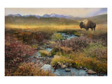 Bison and Creek Print by Chris Vest
