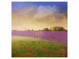 Lavender Fields I Poster von Chris Vest