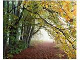 Autumn in Trees Posters