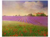 Lavender Fields II Kunstdruck von Chris Vest