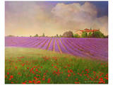 Lavender Fields II Poster by Chris Vest