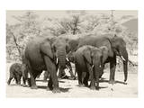 Elephants I Prints by Chris Farrow