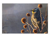Meadow Lark Print by Chris Vest