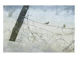 Old Fence Tangle Poster von Chris Vest