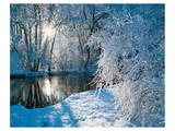 Sparkiling Winter Scene Poster