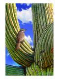 Kaktuszaunkönig Kunstdrucke von Chris Vest