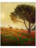 Trees, Poppies and Deer II Poster von Chris Vest