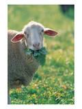Sheep Look Art
