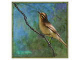 Vireo Prints by Chris Vest