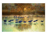 Cranes in Mist II Poster von Chris Vest