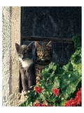 Two Cats Watching From Window Prints