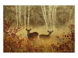 Foggy Deer Poster von Chris Vest