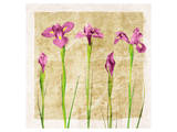Antique Iris I Art by Christine Zalewski