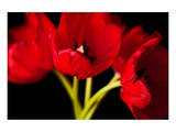 Red Tulips I Print by Christine Zalewski