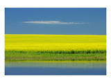 Cloud and Canola Posters by Mike Grandmaison