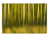 Tree Abstraction II Print by Mike Grandmaison