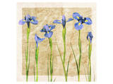 Antique Iris II Posters by Christine Zalewski