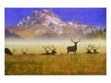Bull Elk Prints by Chris Vest