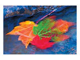 Swirling Maple Leaves II Prints by Mike Grandmaison