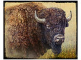 Bison Facing Right Kunstdrucke von Chris Vest