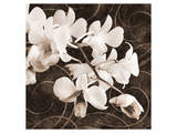 Sepia Orchid II Posters by Christine Zalewski