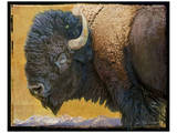 Bison II Prints by Chris Vest