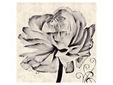 Ranunculus V Prints by Christine Zalewski