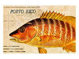 Vintage Color Fish, Porto Rico: US Fish Commission Fish Hawk 1900 Prints by Christine Zalewski